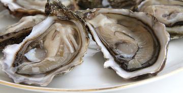 Les huîtres de Thau